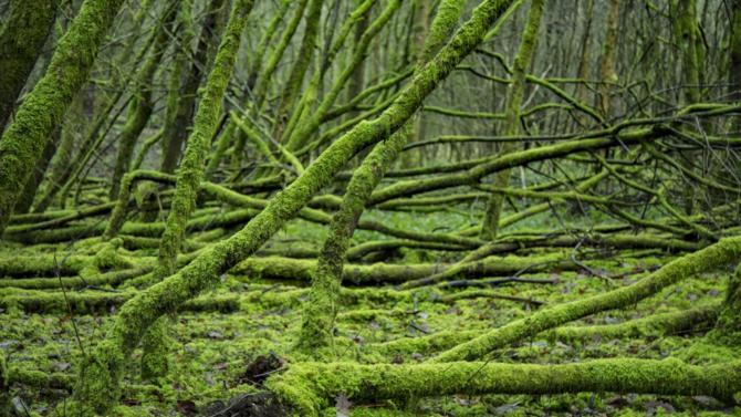 D'après un rapport de la Plate-forme intergouvernementale scientifique et politique sur la biodiversité et les services écosystémiques (IPBES), un million d'espèces animales et végétales risquent de disparaître à brève échéance.