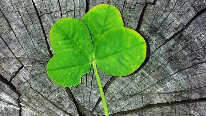 Affichant une santé étincelante et boostée par les 150 compagnies travaillant dans le secteur de la gestion d'actifs, l'industrie des fonds irlandaise génère près de 16 000 emplois directs. Elle impacte l'économie du pays à hauteur de 14 milliards d'euros, selon un rapport publié par l'organisme de recherche indépendant Indecon.