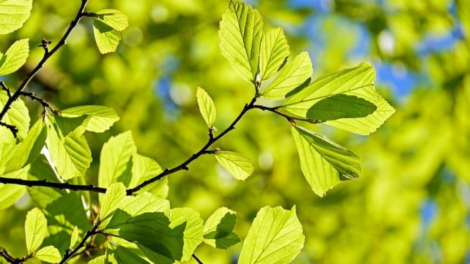 Le géant européen de la gestion d'actifs et le premier émetteur historique d'obligations vertes dans l'Union européenne viennent de signer un partenariat autour du lancement d'un nouveau programme d'investissement, le Green Credit Continuum.