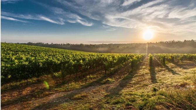 Les cabinets d'avocats Légi Conseils et FV Juriconseils & Associés mettent en commun leurs expertises pour créer le département Légi Conseils Terre & Vigne, dont l'offre se consacre au droit agricole et viticole.