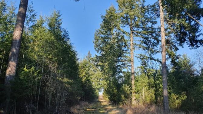 La foncière commerciale Frey a levé le voile sur une stratégie visant à atteindre la neutralité carbone à l'horizon 2030, avec pour principal vecteur la forêt française français. Pour cela, la SIIC a créé son propre groupement forestier, lequel vient de signer sa première acquisition