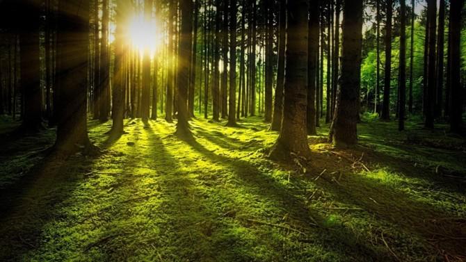 La place financière annonce la création de l'Observatoire de la finance durable. Lancé à l'occasion du Climate Finance Day, cet indicateur doit permettre de contribuer à la transformation progressive du secteur financier.