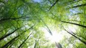 Amundi et la Banque européenne d'investissement lancent Green Credit Continuum