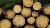 La biomasse sur le fil, en plein débat européen