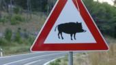 Déviation routière : peut-elle porter un intérêt public majeur justifiant une dérogation à la protection des espèces protégés ?