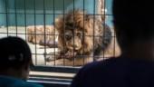 L'animal, un sujet juridique pas comme les autres